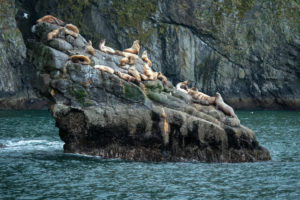 Alaska, Wildlife, animals, scenery, nature, sea lion, rock, water, sea lions