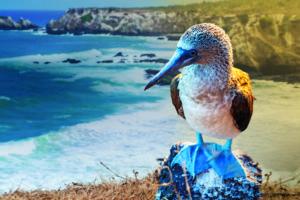 Galapagos Islands & Ecuador, Wildlife, Animals, Nature